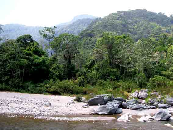 The Cangrejal River with forested mountains