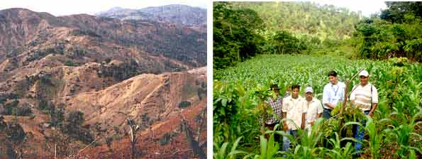 Bare land and Inga