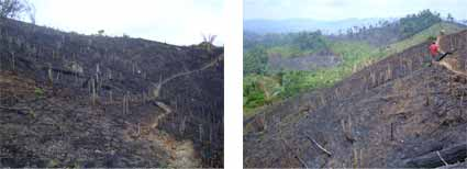 Honduras slash and burn