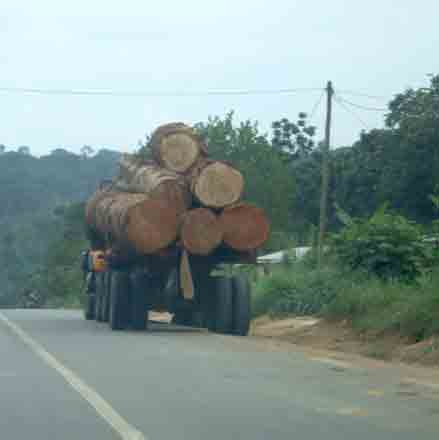 logs in Cameroon