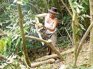 Pruning the Inga