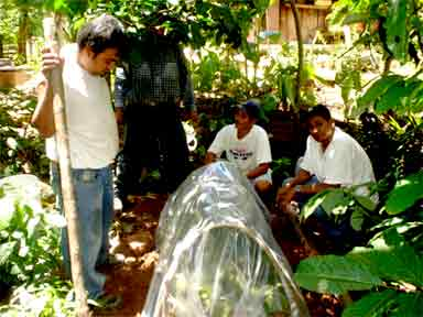 Covering the seedlings