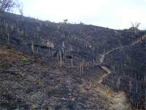 What is slash and burn farming? | Rainforest Saver